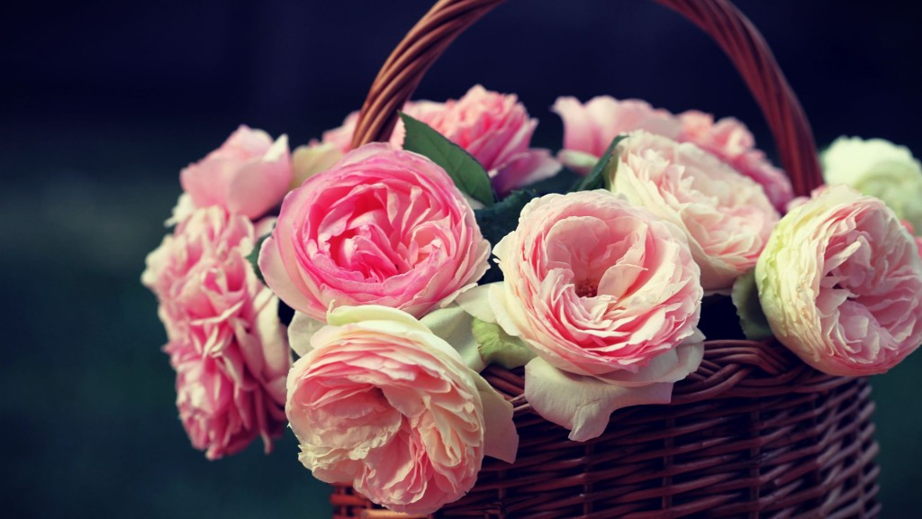 cute-pink-roses-wallpaper-23392-24043-hd-wallpapers