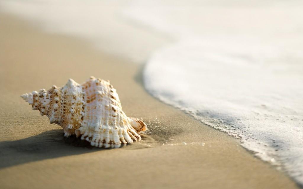 free-seashell-wallpaper-25193-25876-hd-wallpapers