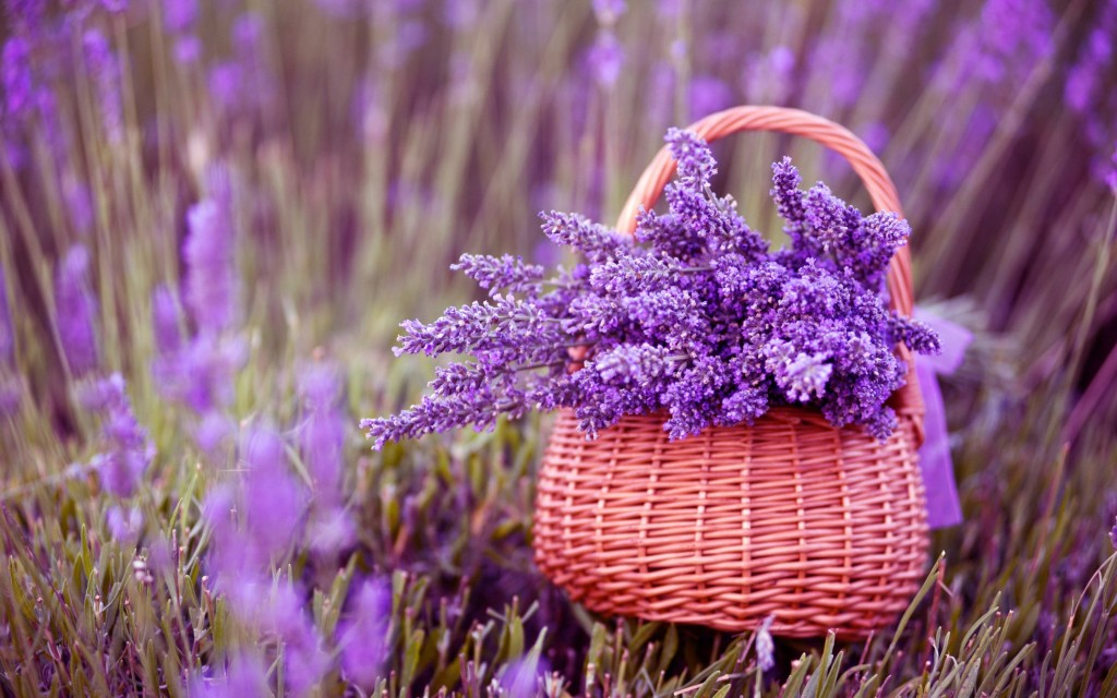 lovely-purple-macro-wallpaper-37995-38865-hd-wallpapers
