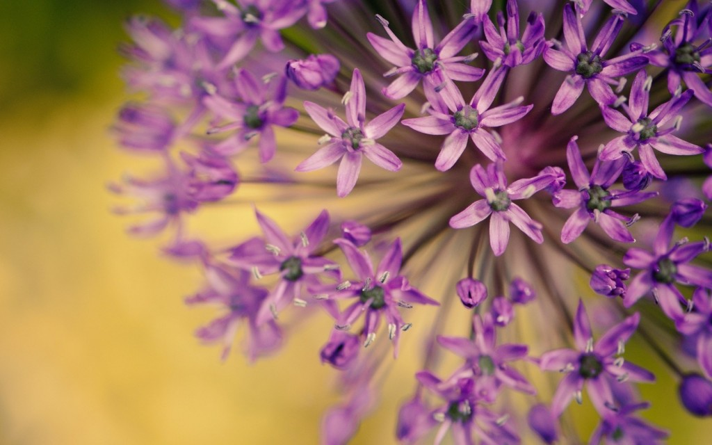 purple-macro-hd-38006-38876-hd-wallpapers