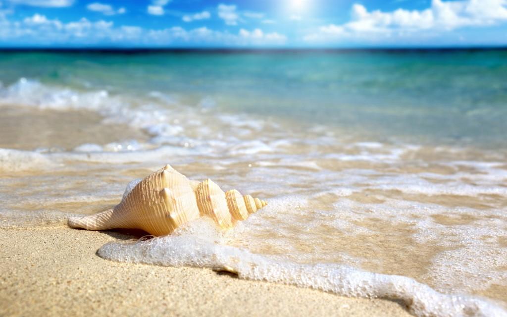 wonderful-beach-shell-wallpaper-41192-42177-hd-wallpapers