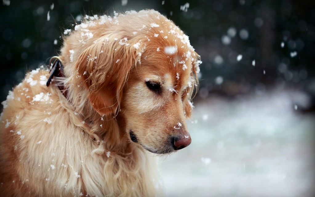adorable-in-snow-wallpaper-38534-39414-hd-wallpapers