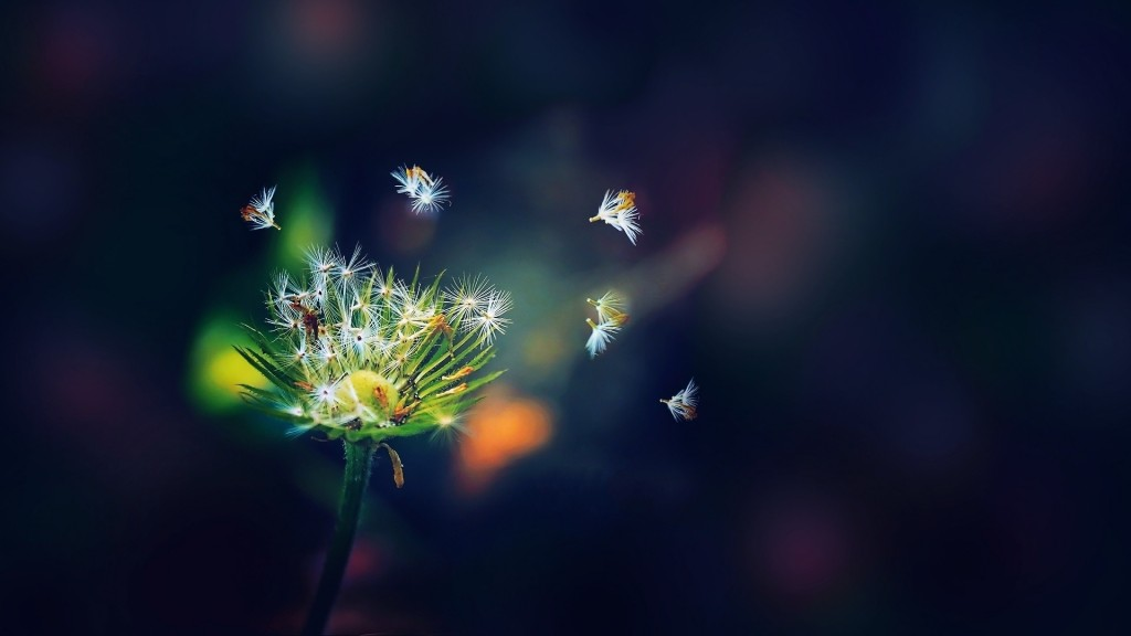 amazing-dandelion-seeds-wallpaper-42636-43647-hd-wallpapers