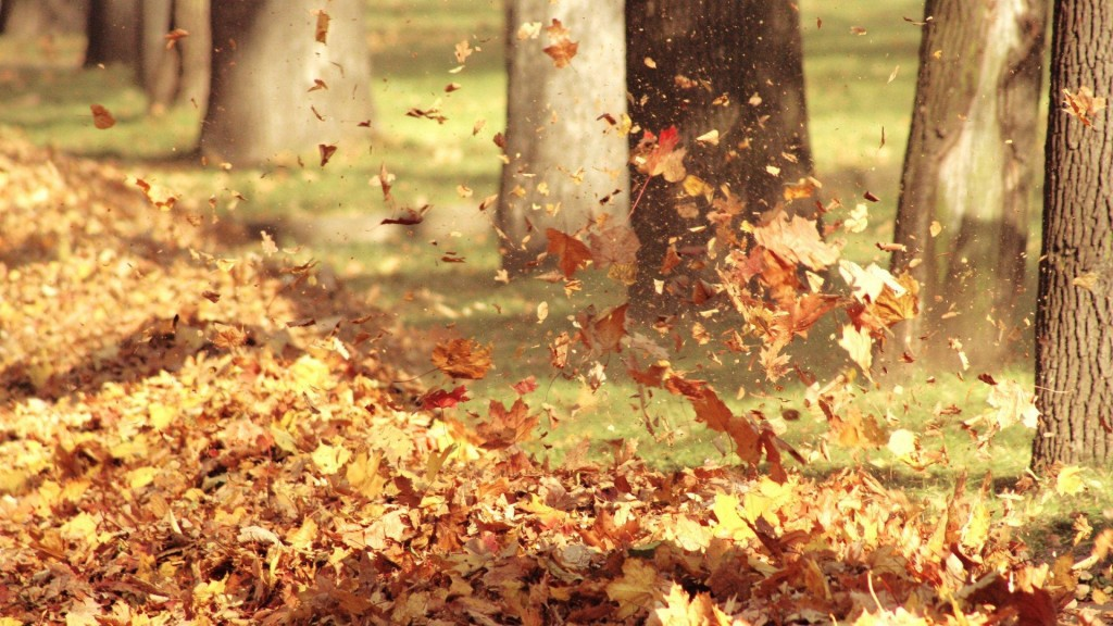 autumn-leaves-33096-33852-hd-wallpapers