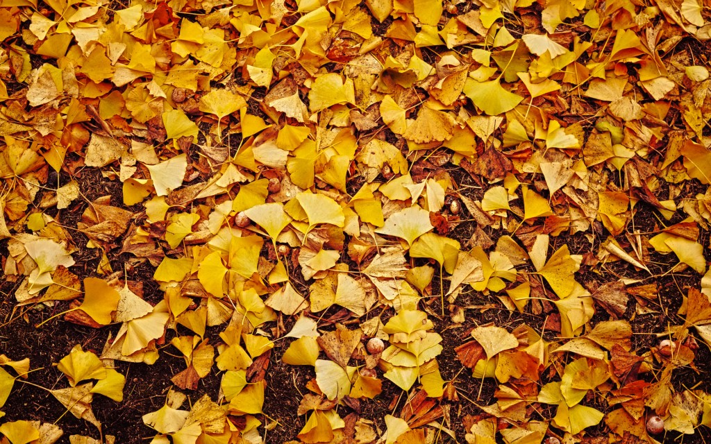 autumn-leaves-wallpaper-33086-33842-hd-wallpapers