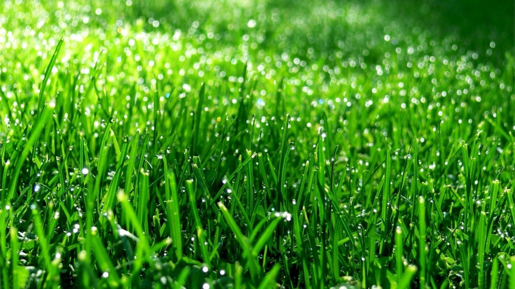 awesome-grass-background-18865-19345-hd-wallpapers