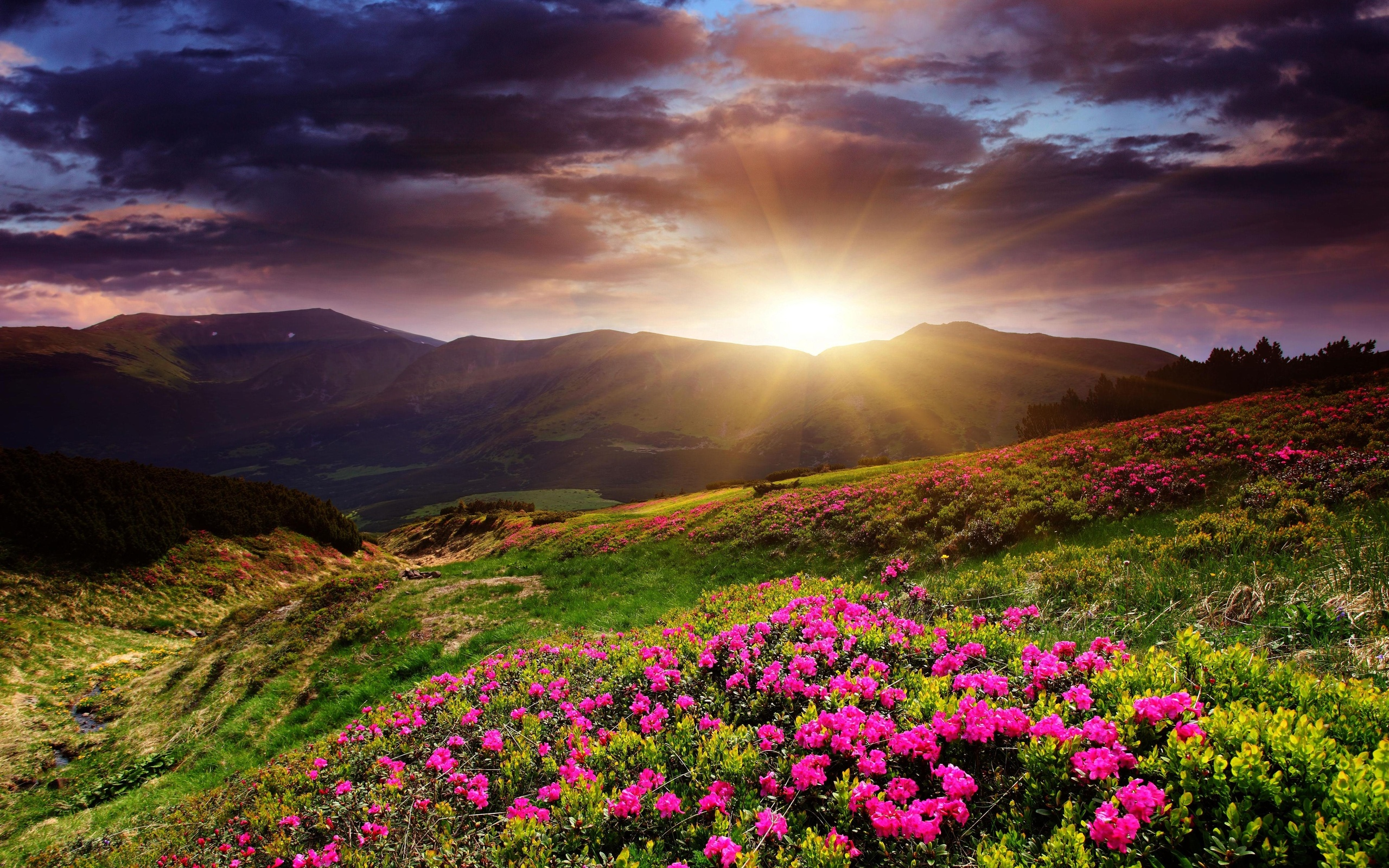 12 Beautiful HD Sunrise Wallpapers  HDWallSource.com
