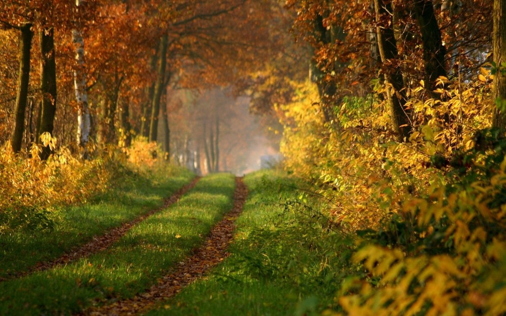 beautiful forest road wallpapers