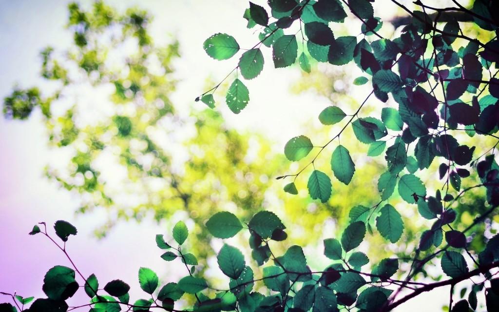 beautiful-leaves-macro-wallpaper-39020-39916-hd-wallpapers