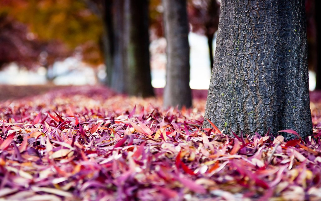 colorful-leaves-wallpaper-30072-30790-hd-wallpapers