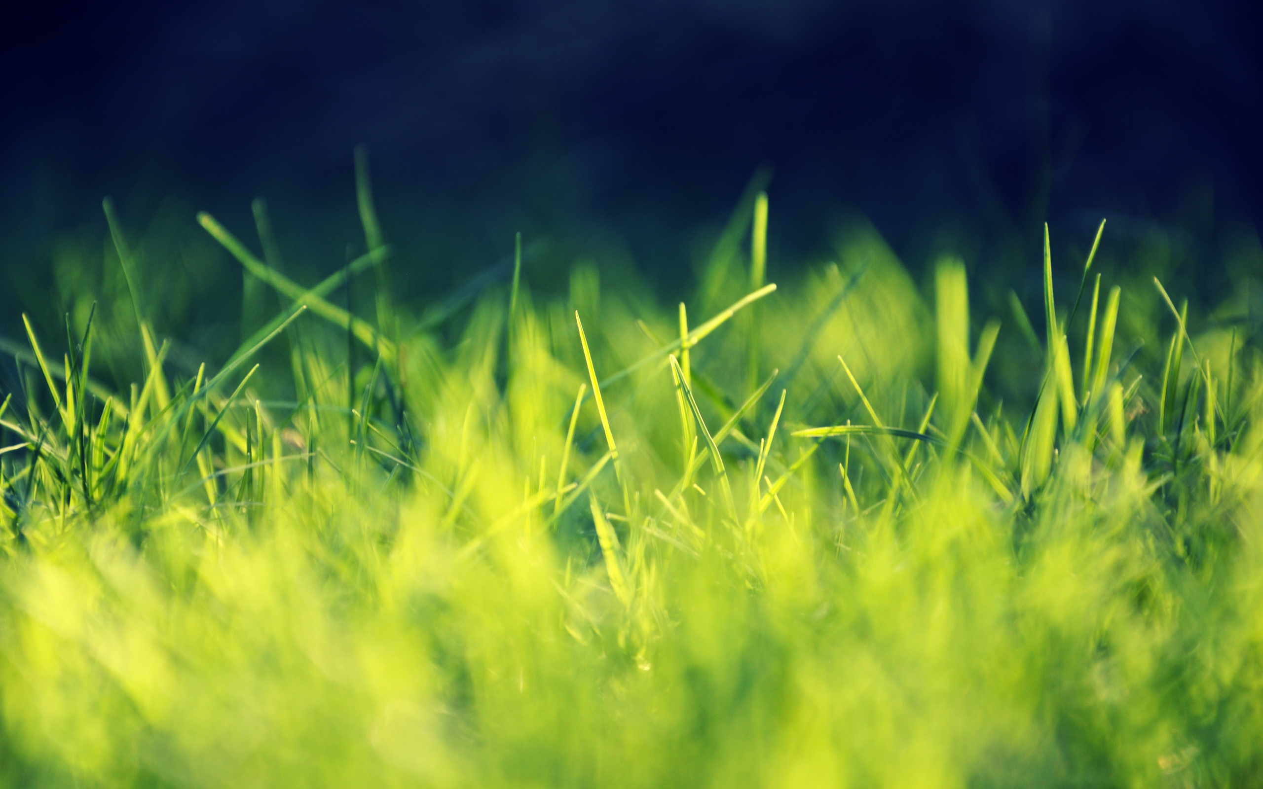 15 pretty hd grass wallpapers for Pretty grass