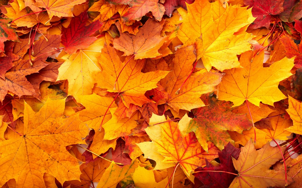 fall-leaves-background-20807-21344-hd-wallpapers