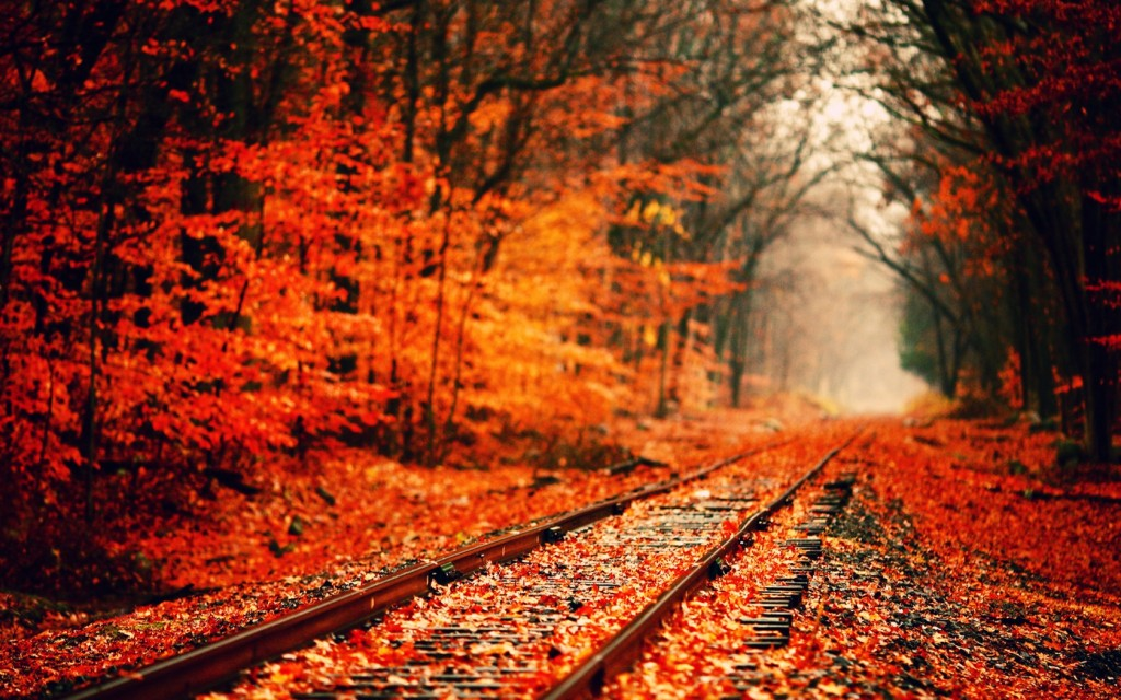 fall-wallpaper-15881-16367-hd-wallpapers