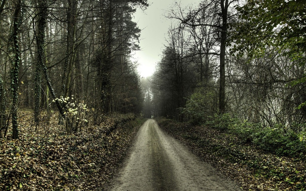 fantastic forest road wallpapers