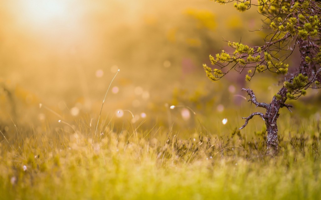 fantastic-grass-bokeh-33934-34699-hd-wallpapers