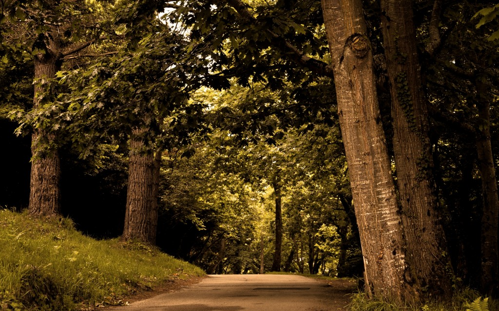 forest road wallpapers