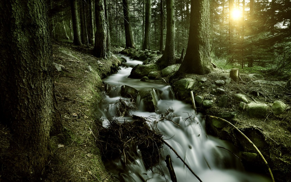 forest stream hd wallpapers