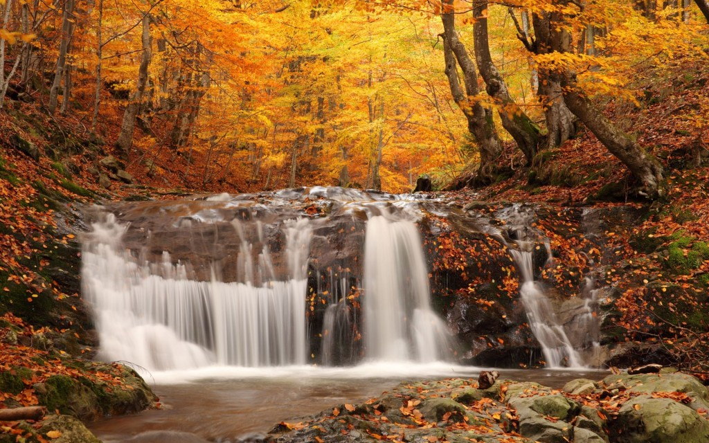 forest-waterfall-wallpaper-34057-34826-hd-wallpapers