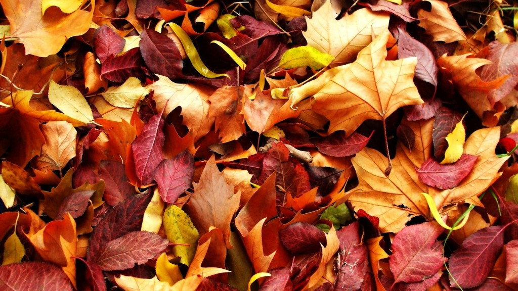 free-autumn-leaves-wallpaper-33092-33848-hd-wallpapers