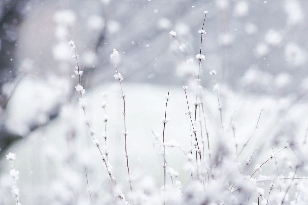 free-winter-wallpaper-17503-18062-hd-wallpapers