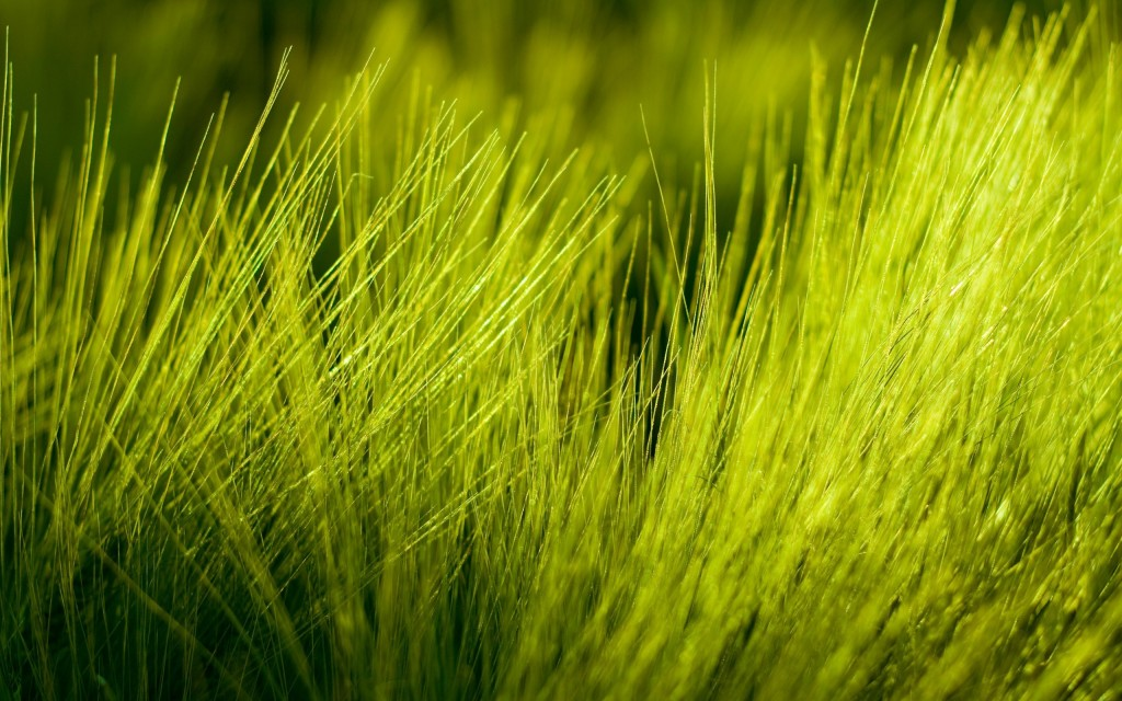 grass-bokeh-hd-33911-34676-hd-wallpapers