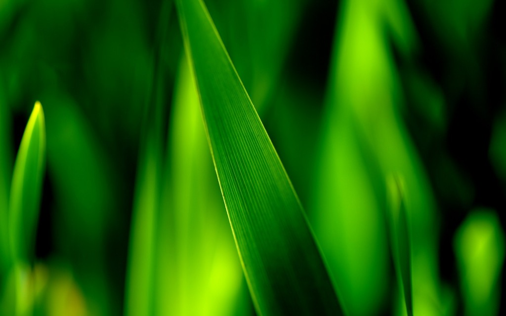 grass-bokeh-wallpaper-33928-34693-hd-wallpapers