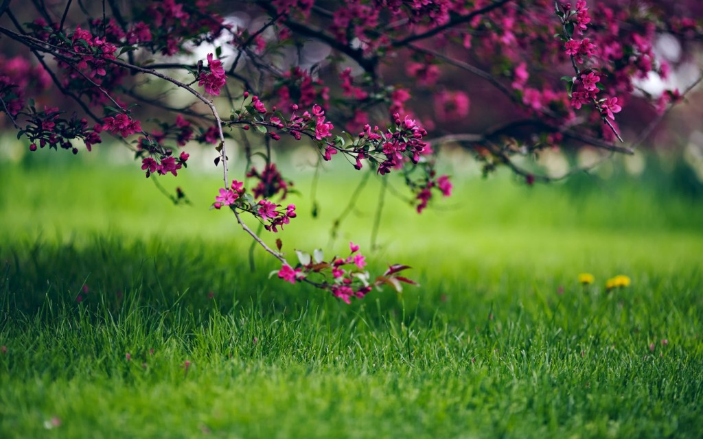 grass-bokeh-wallpapers-33932-34697-hd-wallpapers