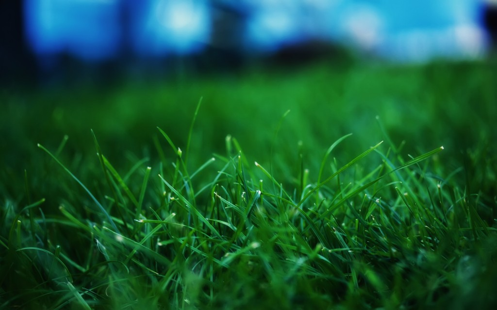 grass-wallpaper-13876-14293-hd-wallpapers