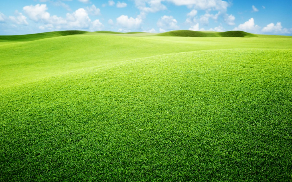 grasslands-background-39652-40569-hd-wallpapers
