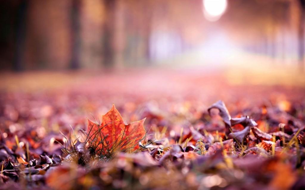 leaves-macro-39021-39917-hd-wallpapers