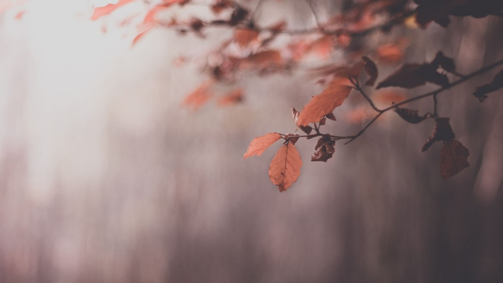 lovely-leaves-macro-wallpaper-39012-39908-hd-wallpapers