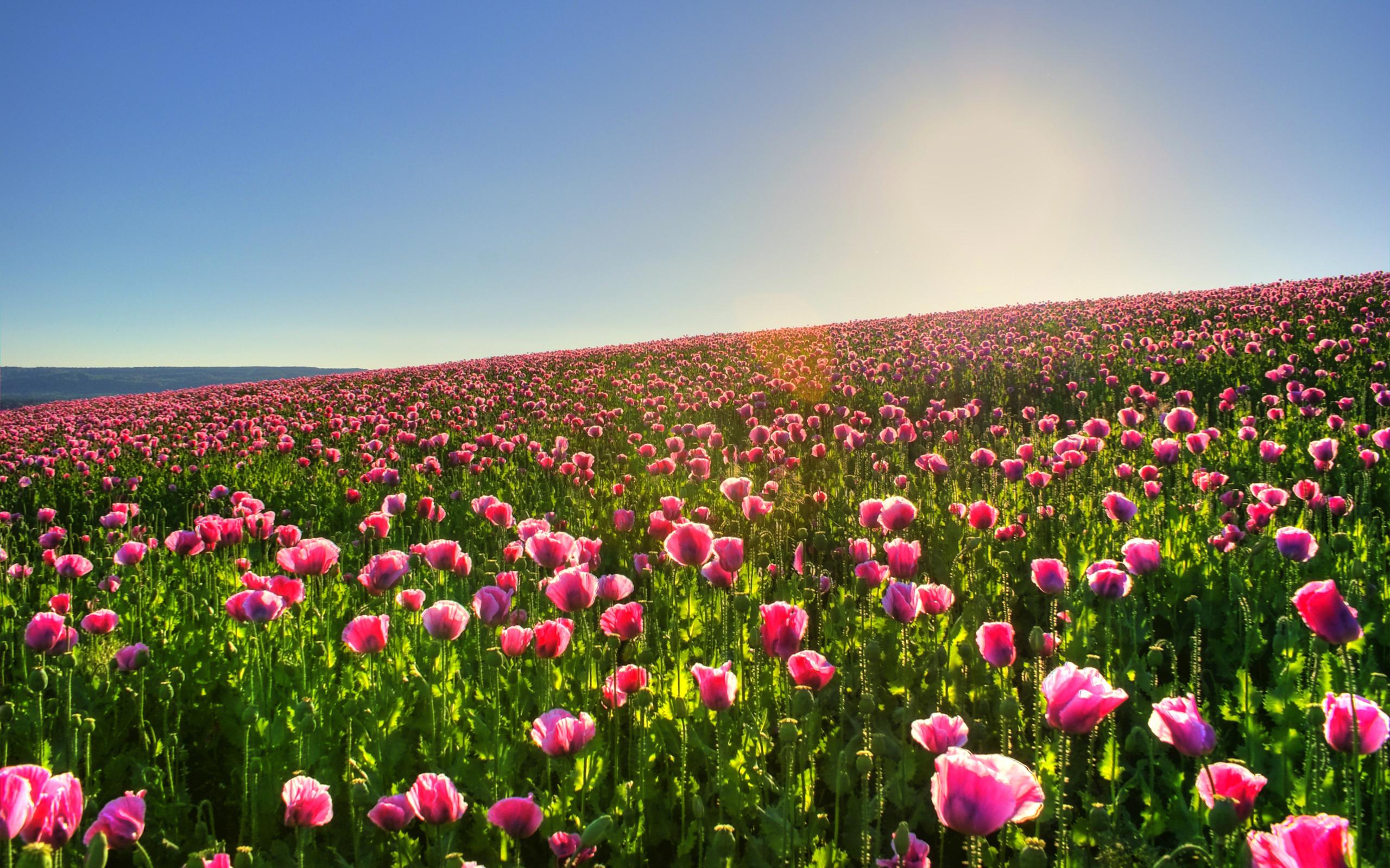 15 Wonderful HD Meadow Wallpapers