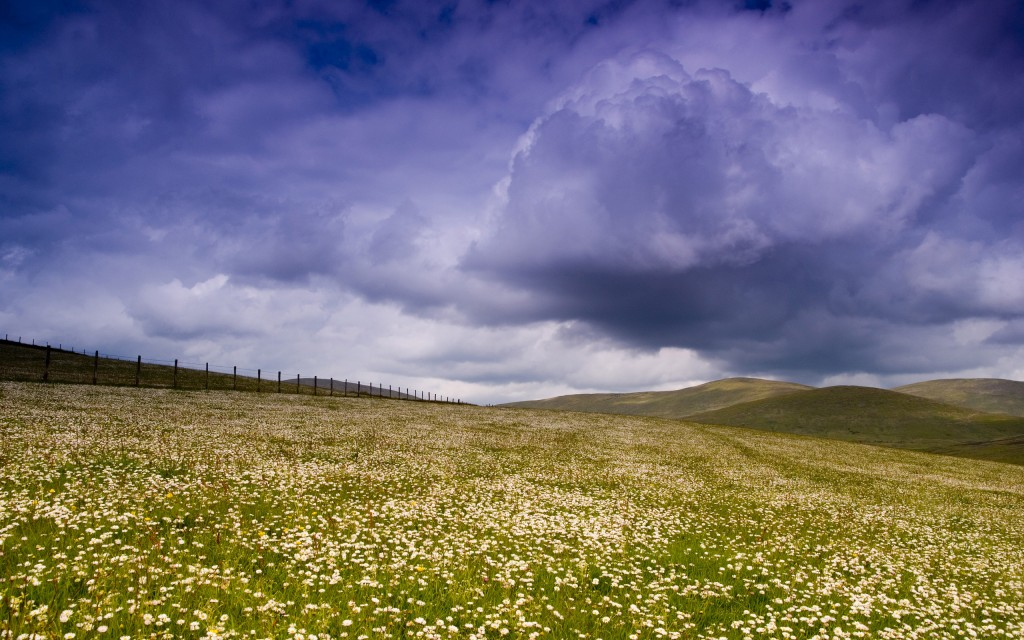 meadow wallpapers