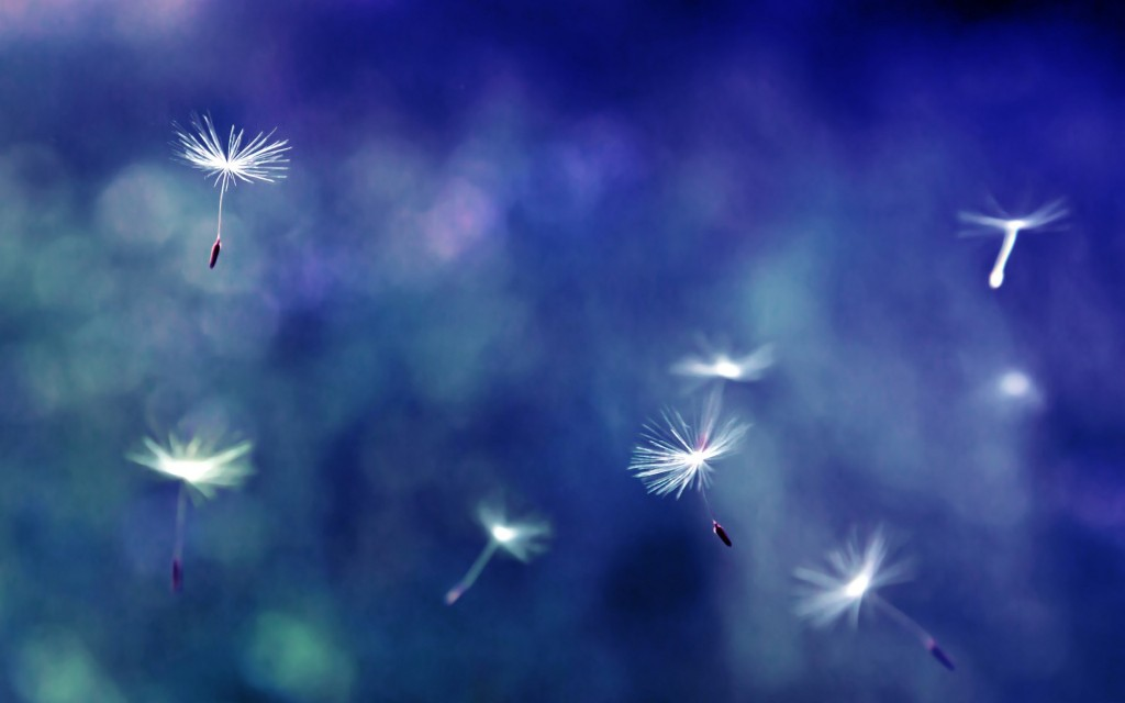 pretty-dandelion-wallpaper-21993-22549-hd-wallpapers
