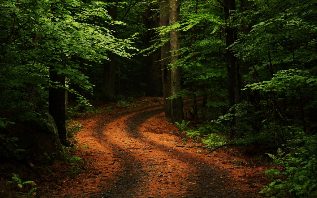 stunning forest road wallpapers