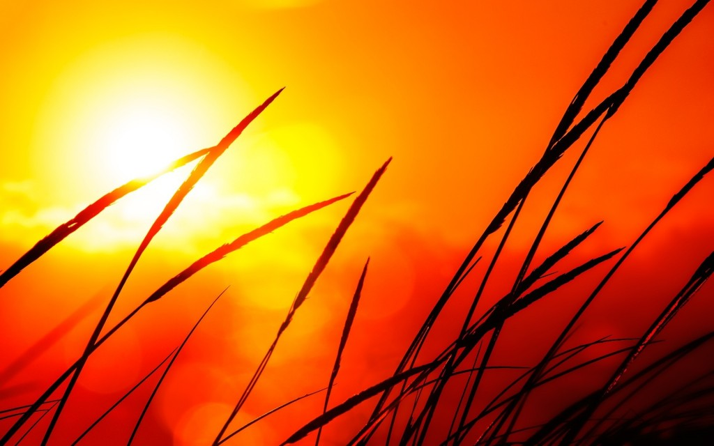 sunlight-wallpaper-36070-36894-hd-wallpapers