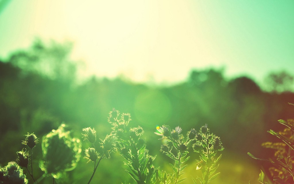 sunlight-wallpaper-36080-36904-hd-wallpapers