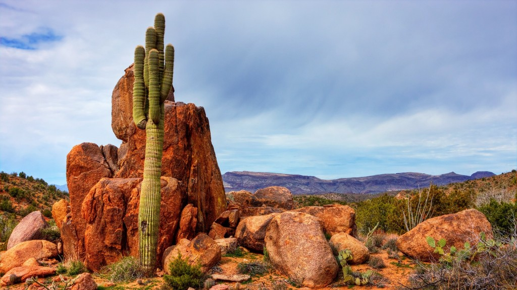 amazing-saguaro-wallpaper-41781-42784-hd-wallpapers