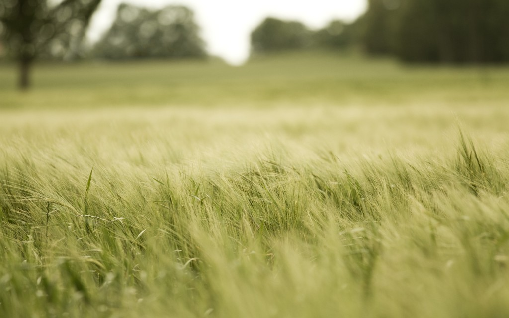 field-wallpaper-31082-31814-hd-wallpapers
