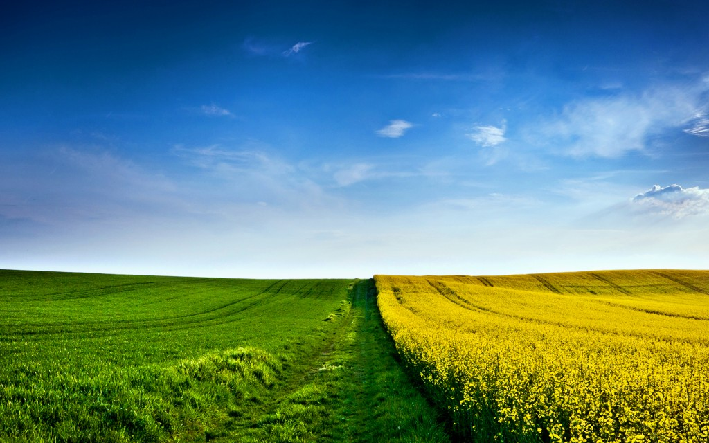 field-wallpaper-31087-31819-hd-wallpapers