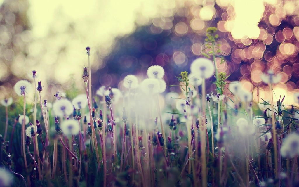 flower-bokeh-wallpaper-33926-34691-hd-wallpapers