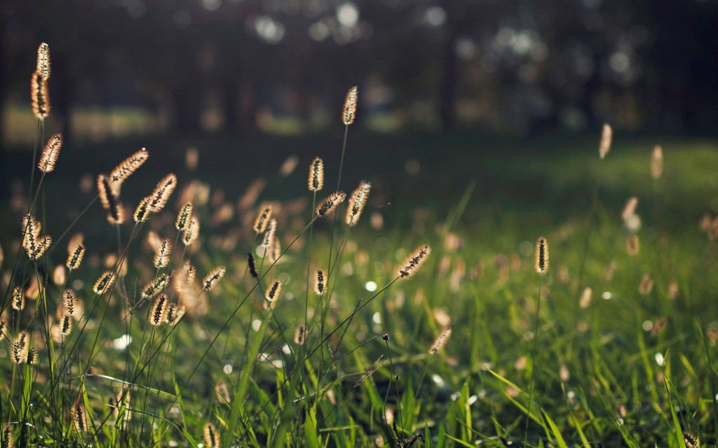 free-grass-bokeh-wallpaper-33931-34696-hd-wallpapers