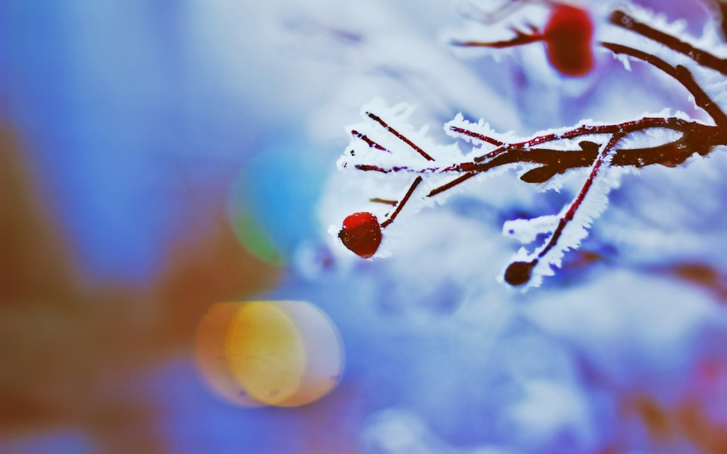 frozen-berries-wallpaper-44421-45546-hd-wallpapers