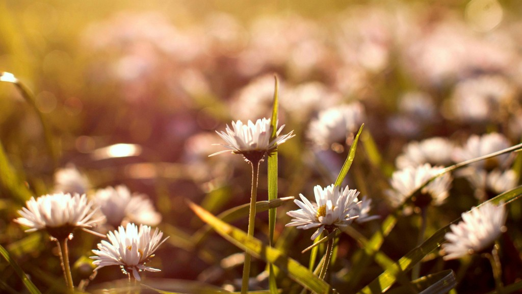 gorgeous-daisy-bokeh-wallpaper-39254-40159-hd-wallpapers