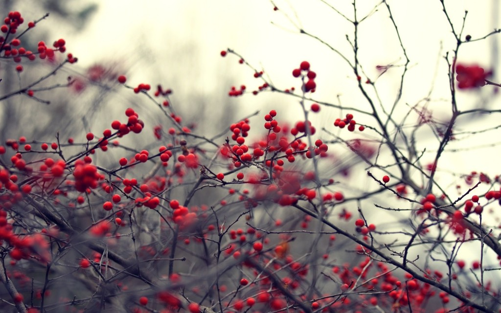 nature-berries-wallpaper-44420-45545-hd-wallpapers
