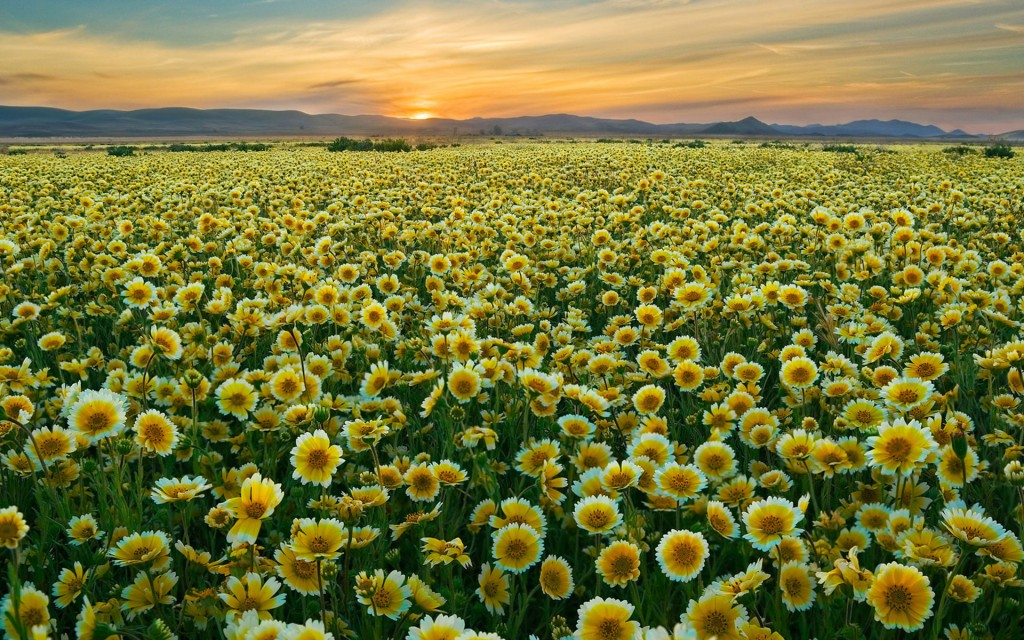 pretty-flower-field-wallpaper-42767-43785-hd-wallpapers