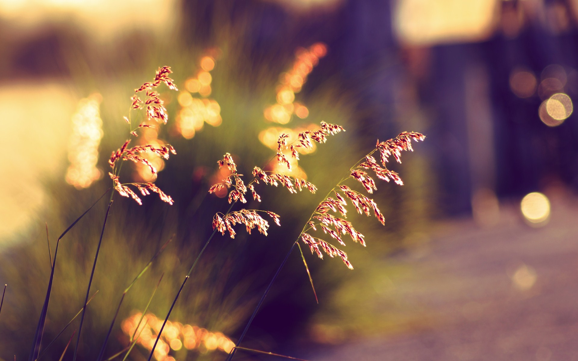Hd wallpaper bokeh - 20 Beautiful Hd Bokeh Wallpapers