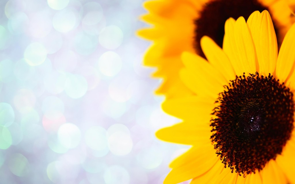 sunflowers-21590-22129-hd-wallpapers