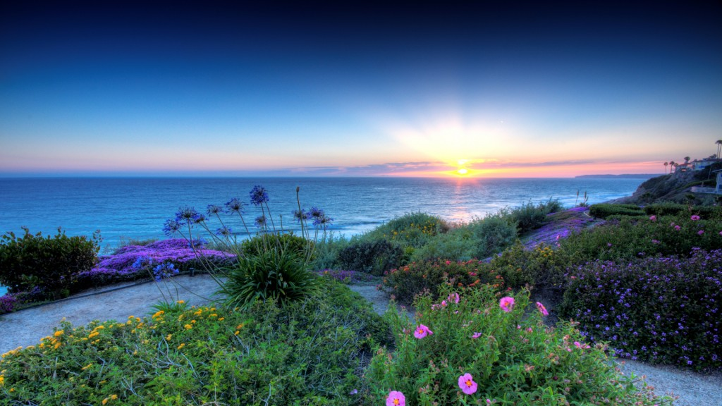 Beautiful Flowers On San Clemente California Seacoast Hdr HD Desktop Background
