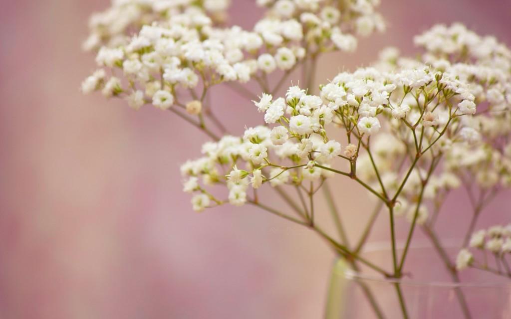 lovely-flowers-vase-wallpaper-44235-45349-hd-wallpapers